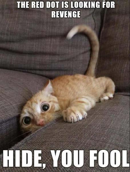 Best-Cat-Memes-1-Memes-Cats