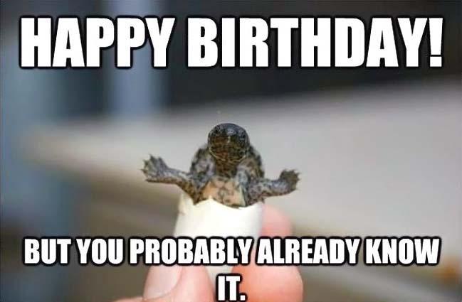 Birthday_Memes_Animals_Funny