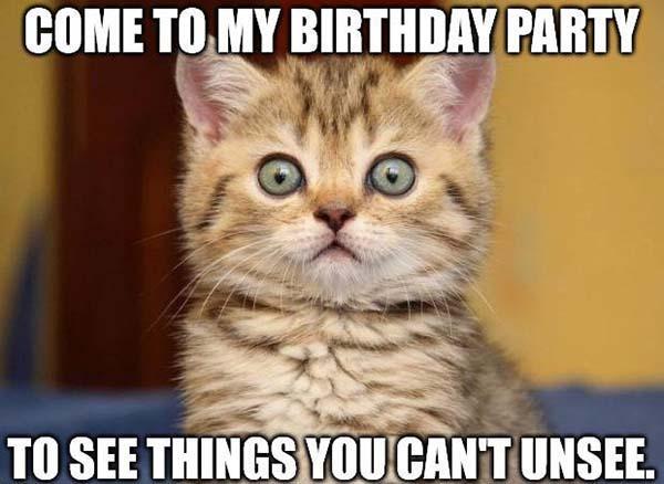 Funny-Birthday-Party-Kitten-Meme