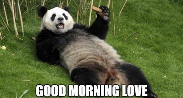 Good morning love panda
