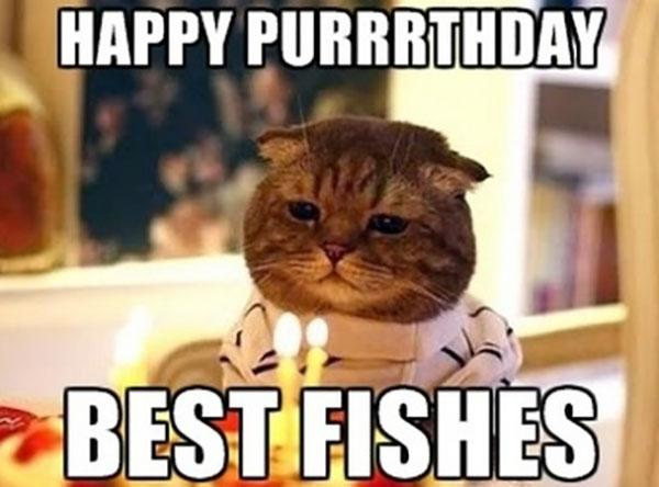 Happy-BIrthday-Cat-Memes