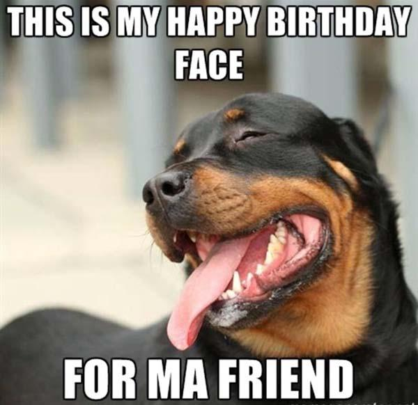 Happy-Birthday-Funny-Dog-Rottweiler