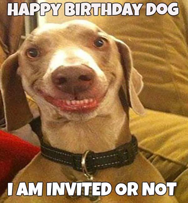 Happy-birthday-memes-for-Dog1