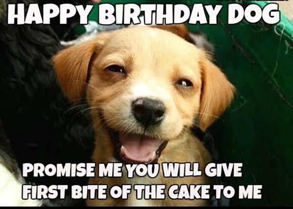 Happy-birthday-memes-for-Dog4