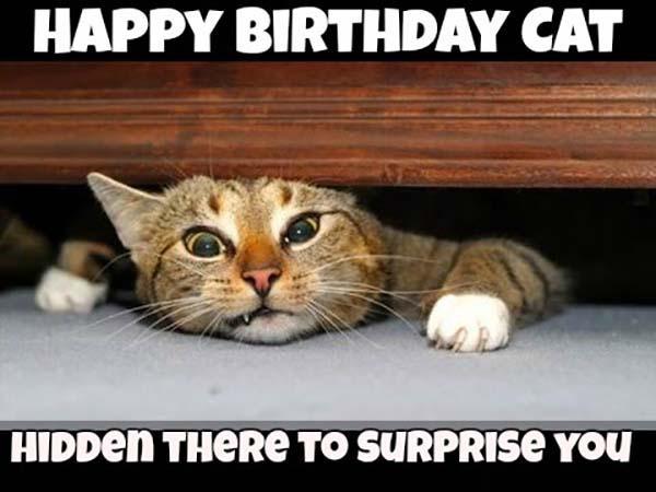 Happy-birthday-memes-for-cats