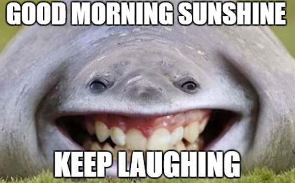 Laughing-Whale-Good-Morning-Memes