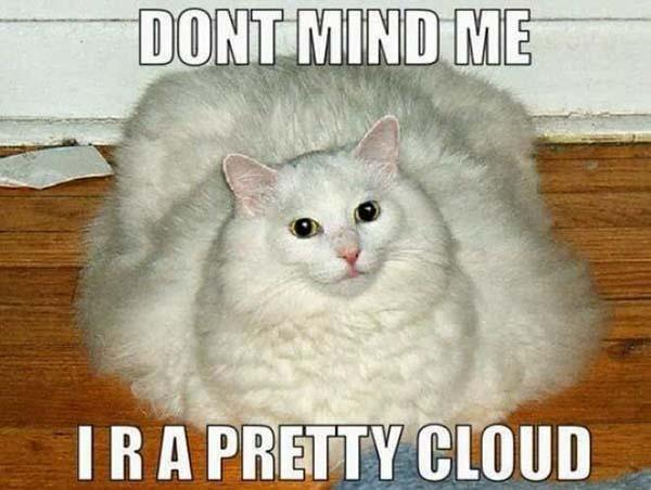 Pretty-Cloud-Cat-Meme