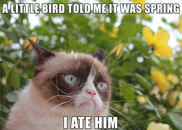 a little bird grumpy cat meme