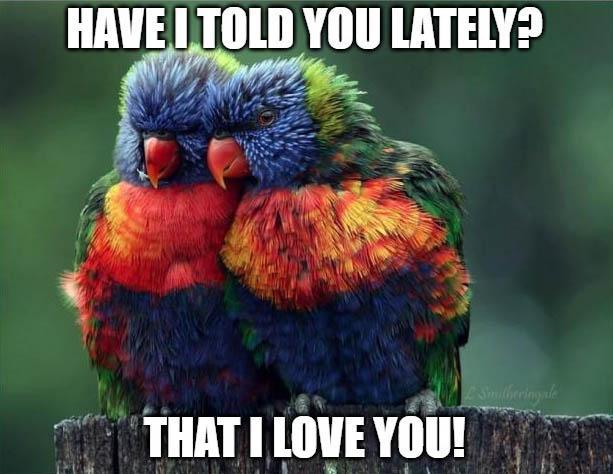 bird funny love memes