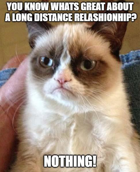 cat long distance relationship memes