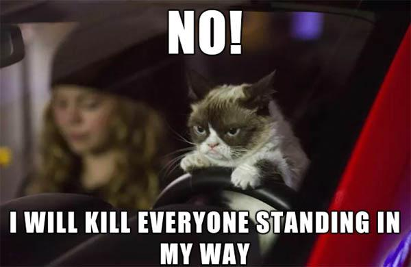 crazy grumpy cat meme