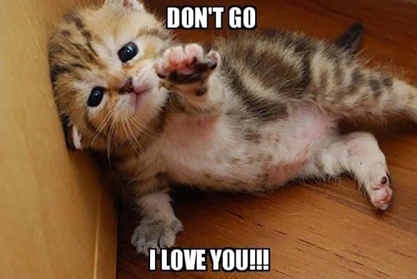 cute funny love memes cat