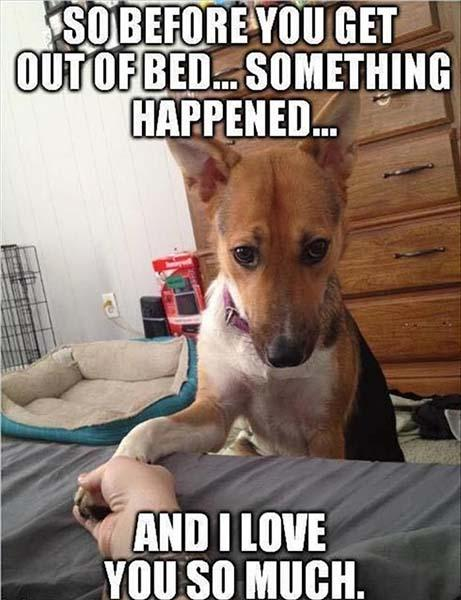 dog love memes for him