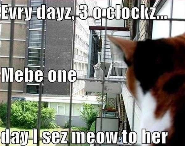 funny-cats-in-love-memes