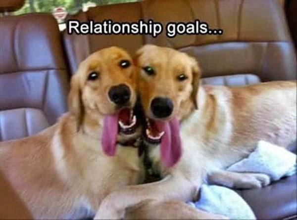 funny-dog-memes-relationship-goals-1
