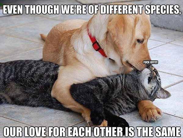 funny romantic memes dog