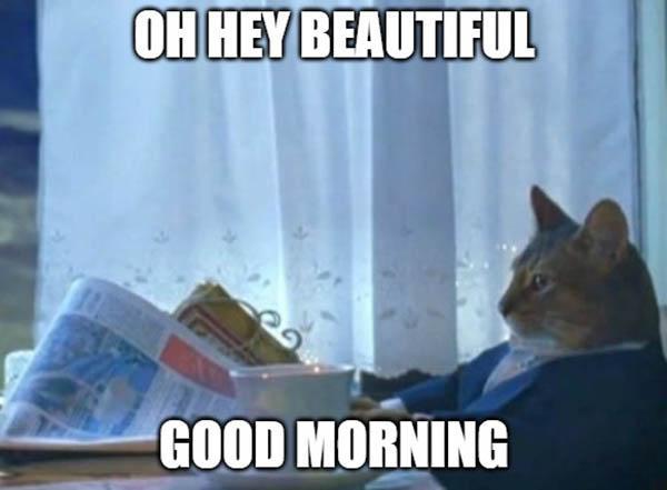 good morning beautiful meme cat