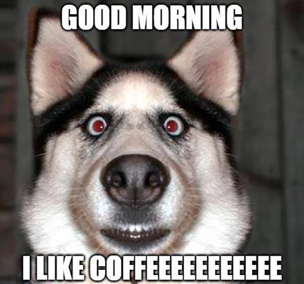 good morning coffee meme dog