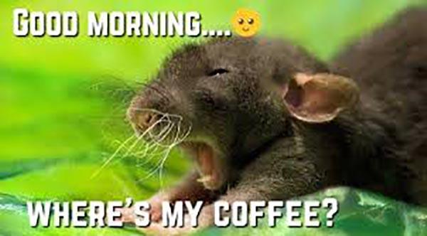 good morning coffee meme where is my coffee