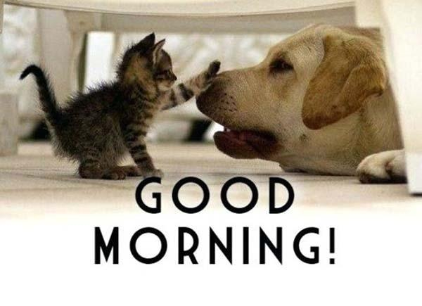 good morning cute cat and dog