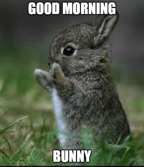 good morning cute rabbit