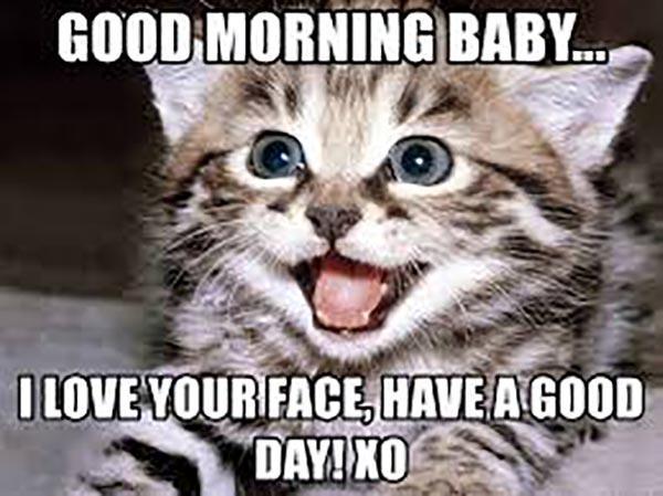 good morning love cat