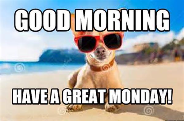 good morning monday meme dog