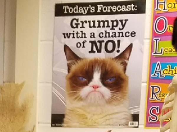 grumpy cat meme funny
