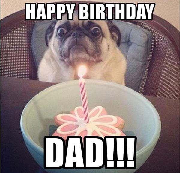happy-birthday-dad dog