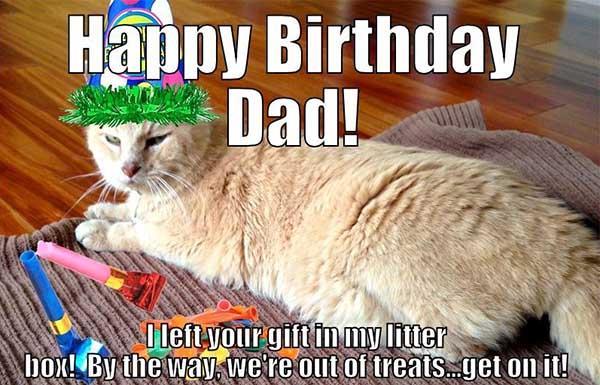 happy birthday dad meme cat
