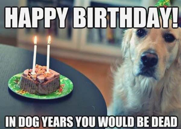 happy-birthday-dog-meme-funny