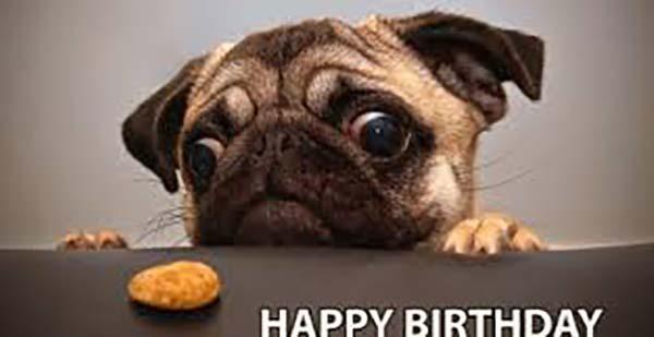 happy birthday meme dog funny