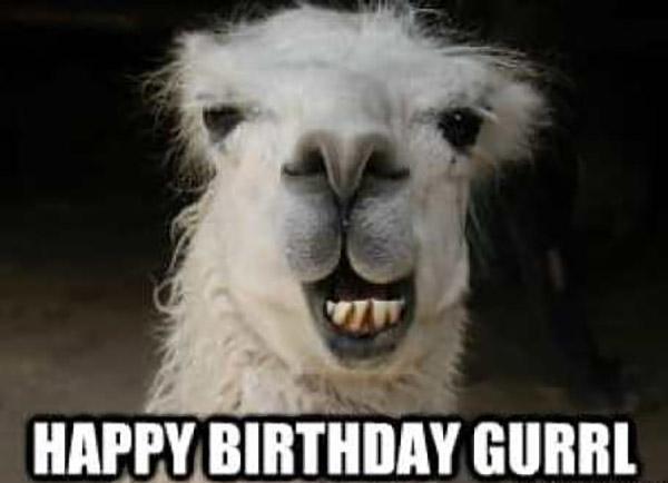happy-birthday-meme-llama