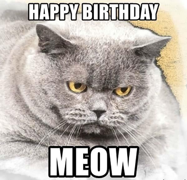 happy-birthday-meow