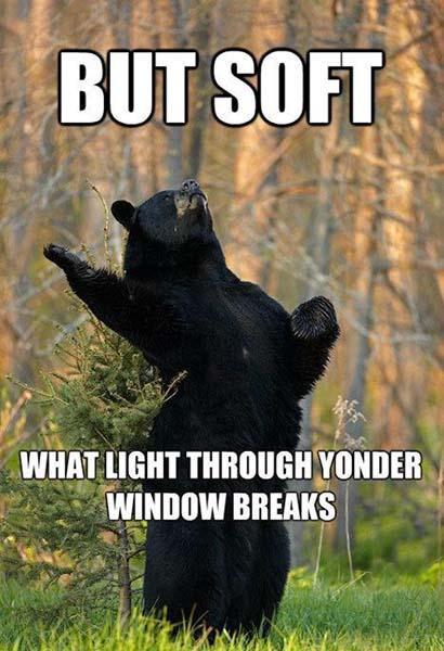 hilarious bear romantic memes