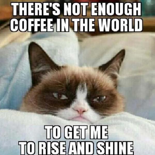 hilarious grumpy cat meme
