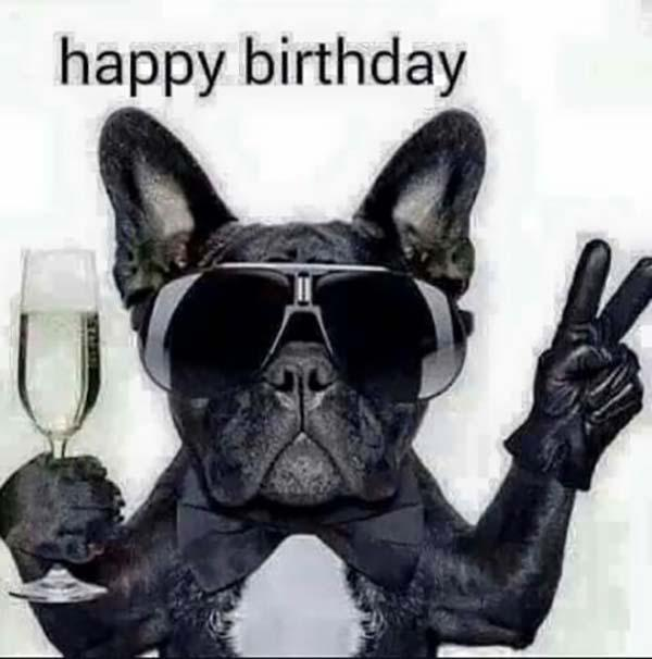 hilarious happy birthday meme dog