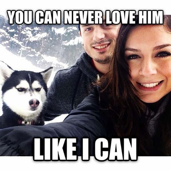 husky_and_couple_funny_love_meme