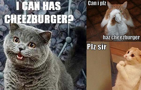 i-can-has-cheezeburger cat meme