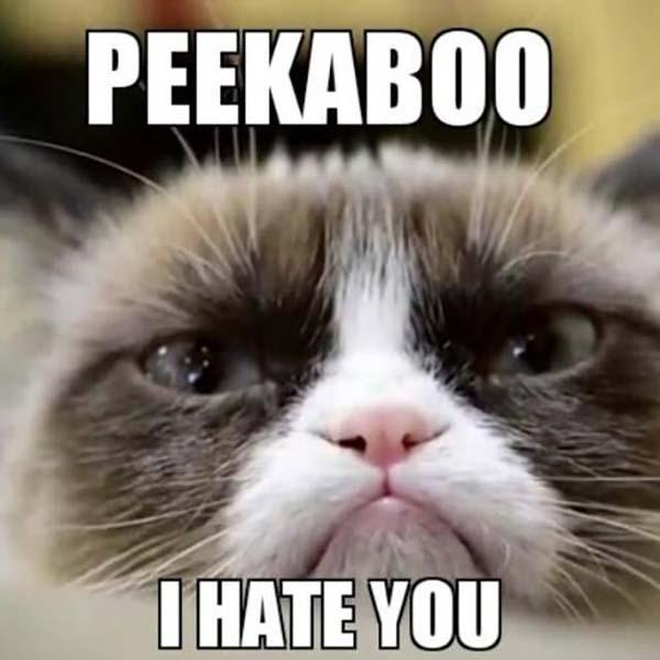 i hate you grumpy cat meme