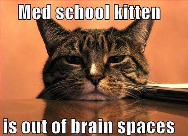 medical school memes cat