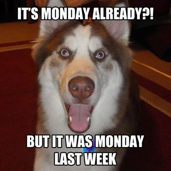 meme-monday dog