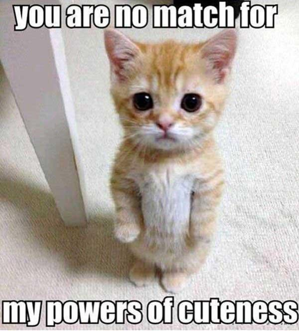 power of cuteness cat meme