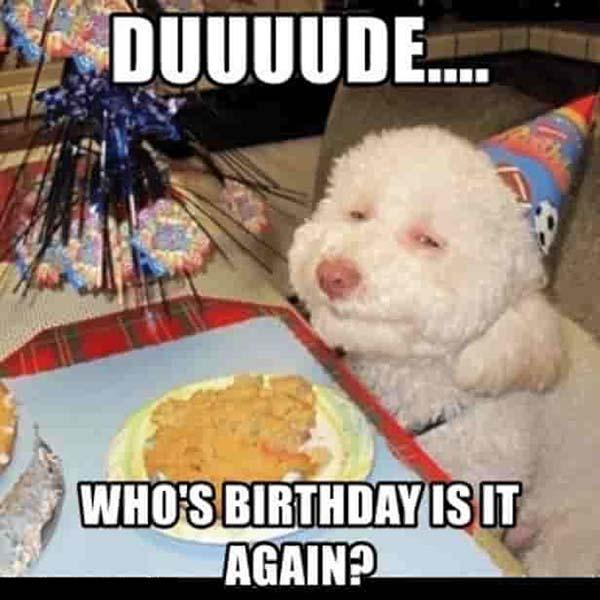 sarcastic-dog-funny-birthday-memes