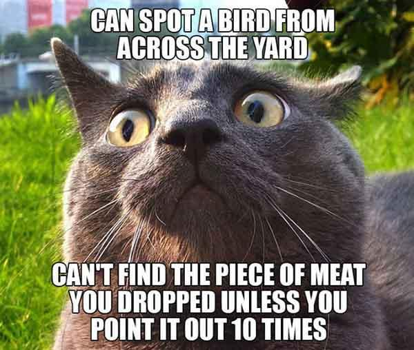 scumbag-cats