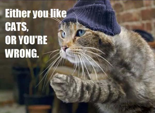 thug-life-cat-memes