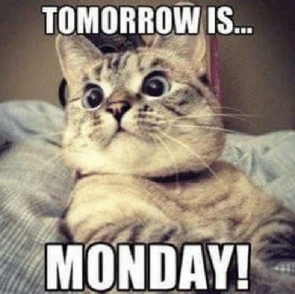 tomorrow-is-monday cat