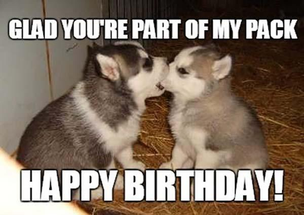 two_puppies_inappropriate_birthday_me