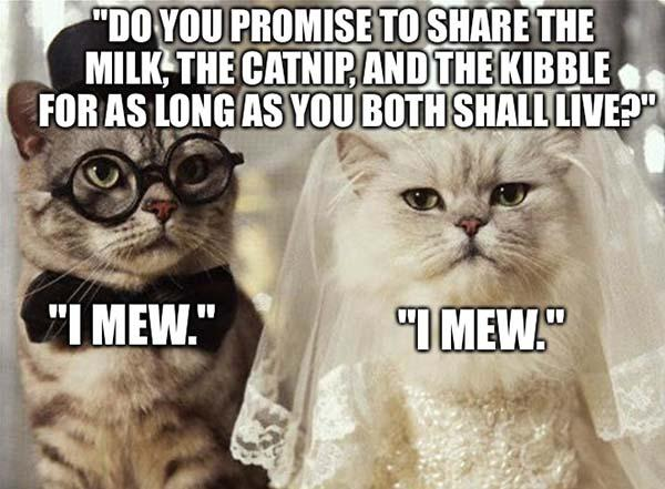 wedding cat meme
