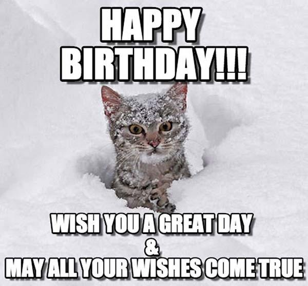 wish-you-a-great-day-cat-birthday-meme